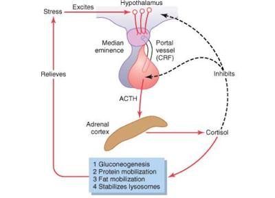 ACTH alto e basso sintomi