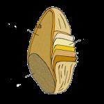 Parti-chicco-grano.png