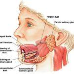 amilasi-salivare.jpg