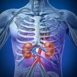Azotemia alta e bassa cause valori normali
