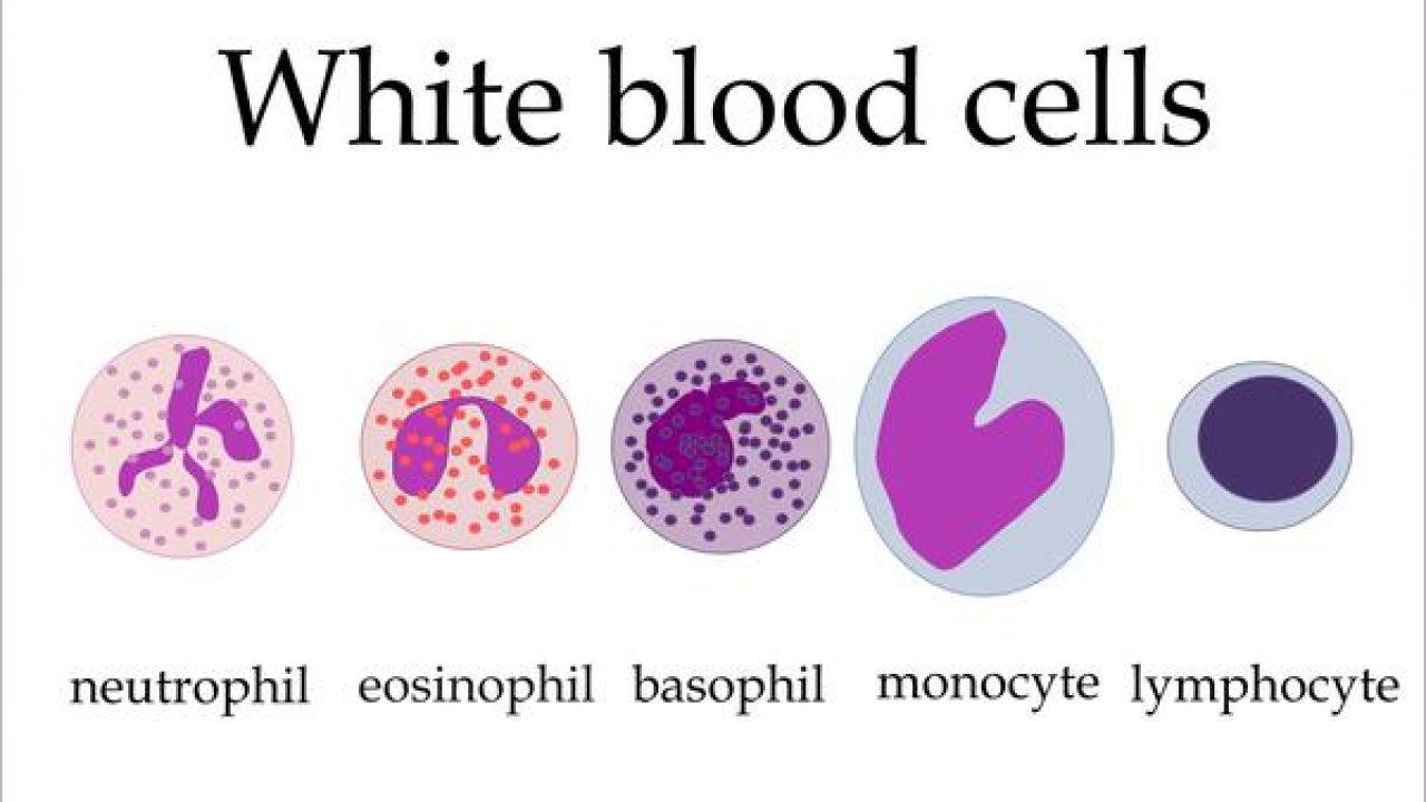 prostatite bassa conta dei globuli bianchi