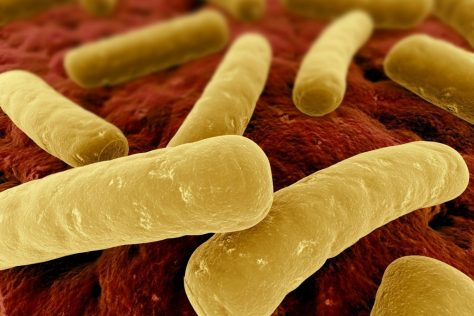 Clostridium difficile Terapia
