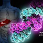 Anticorpi Anti-Epatite C