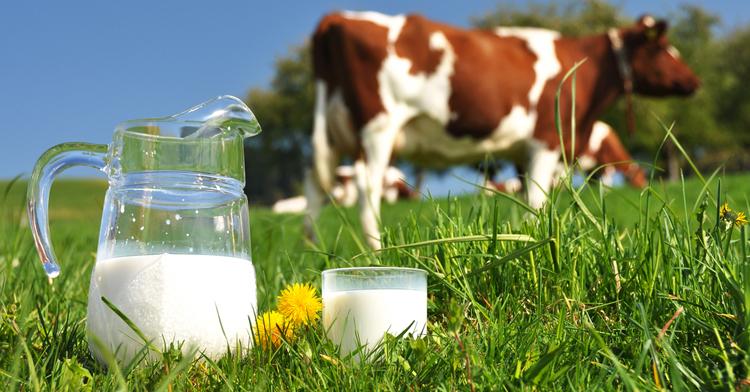 Latte crudo e pastorizzato