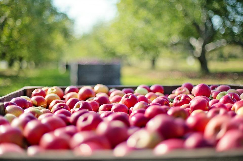 le mele fanno ingrassare