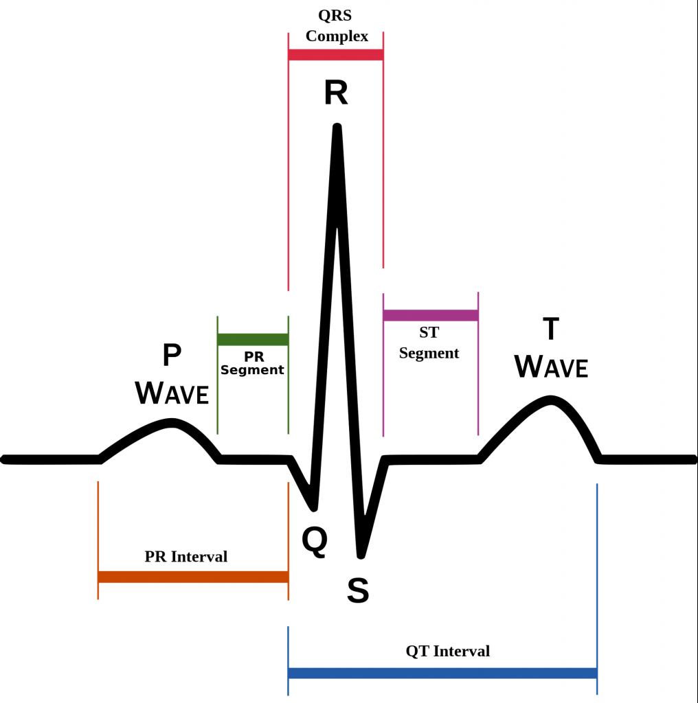elettrocardiogramma normale