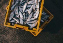 Pesce: 5 falsi miti a cui non credere